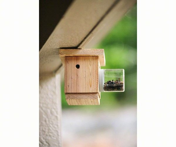 Hanging Carpenter Bee Trap With Images Bee Traps Carpenter