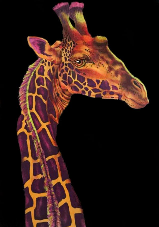 Giraffe coloured by me from the Dutch version of the