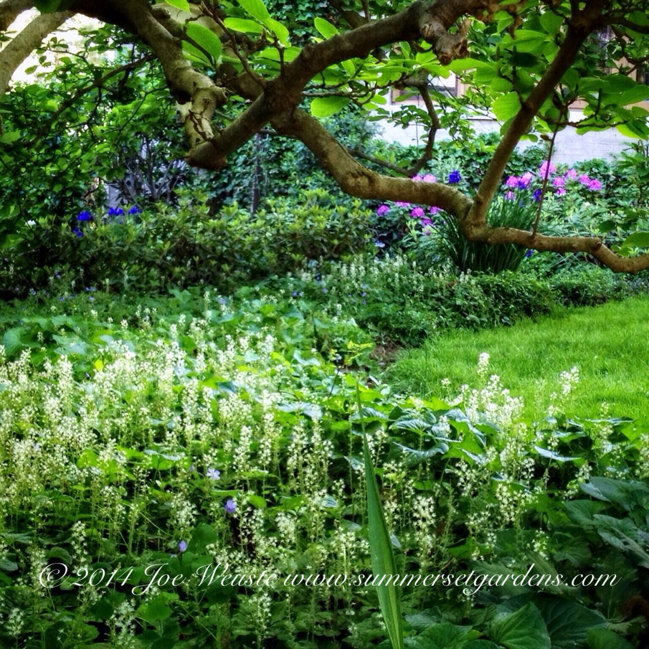 An example of how groundcovers can be used in the garden.   Landscape, garden design and construction services in the NY and NJ areas.  Summerset Gardens Elegant Landscape Design, Fine Workmanship   845-590-7306  http://www.summersetgardens.com