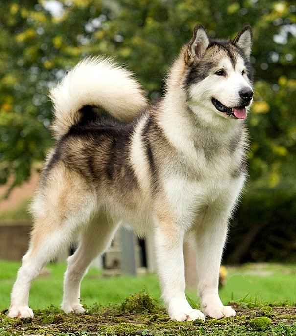 White And Brown Dog Names Male
