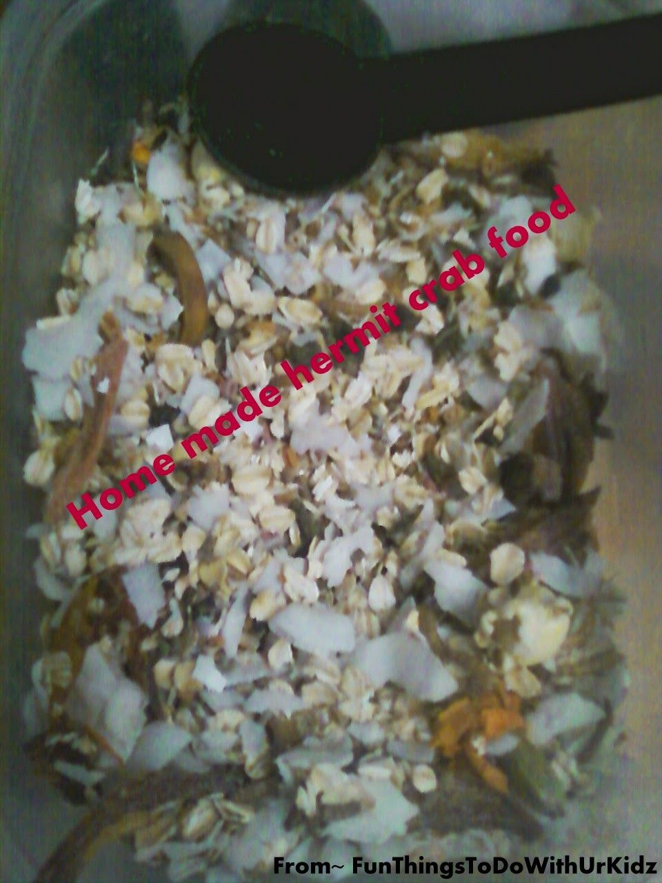FunThingsToDoWithUrKidz: Home made hermit crab food (that kids can help with)