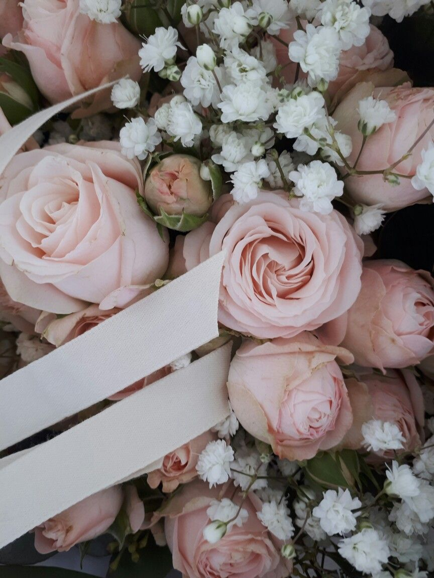 Petites Roses Rose Pale Night Pink Little Roses Www