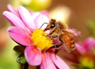 How busy the bee!