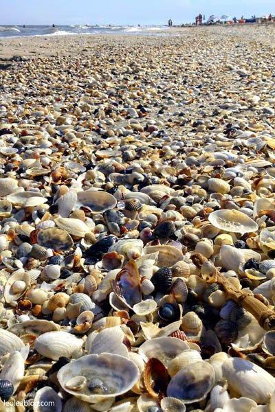 Plaża VADU - Rumunia Vadu beach - Romania Muszelki, shells