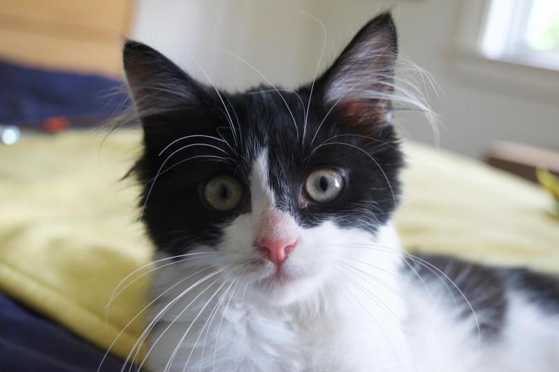 Adopt Faygo On Petfinder Dog Adoption Lion Cat Dog Cat