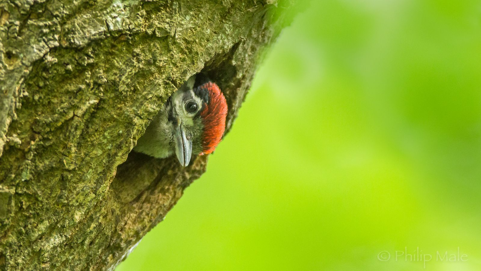 ... Fire in the hole ...   by Grandpops Woodlice