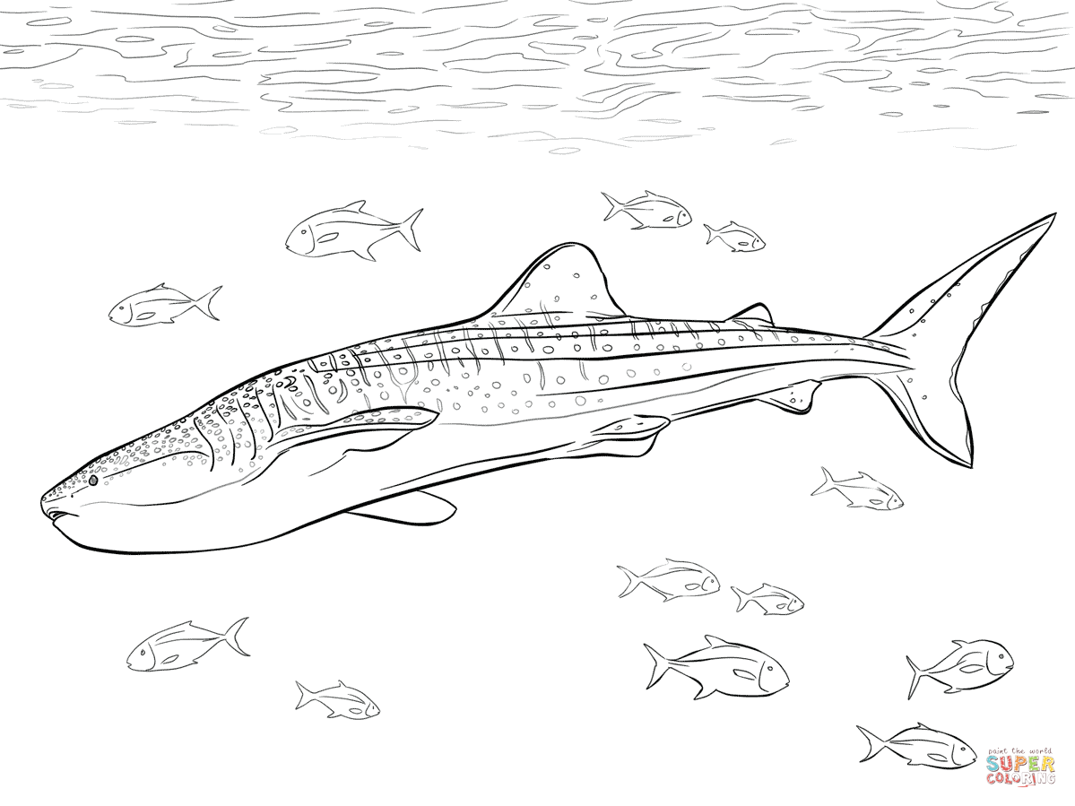 Realistic Whale Shark Super Coloring Shark Coloring Pages Whale Coloring Pages Whale Shark