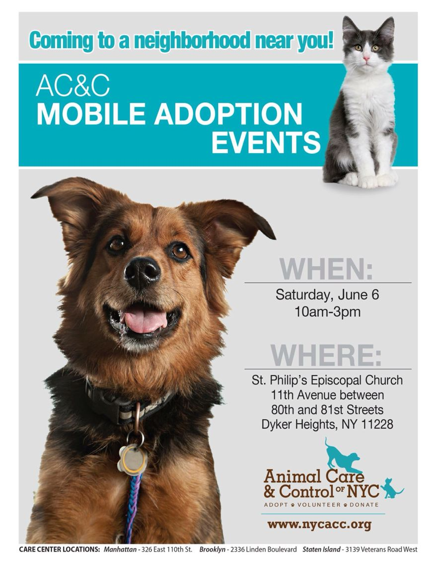 Brooklyn Adoption Alert Come On Over To St Philip S Church Fair Today June 6th Animal Care Control Of Nyc Ac Pet Adoption Event Pet Care Kitten Adoption