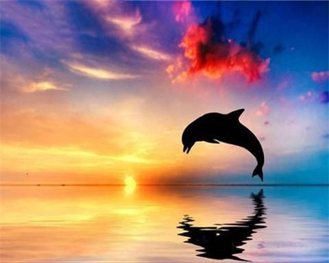 Dolphin Shadow At Sunset - Animals Paint By Numbers#animals #dolphin #numbers #paint #shadow #sunset