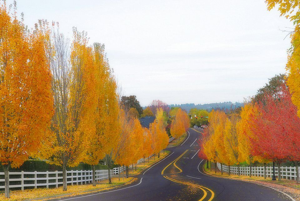 autumn in Oregon