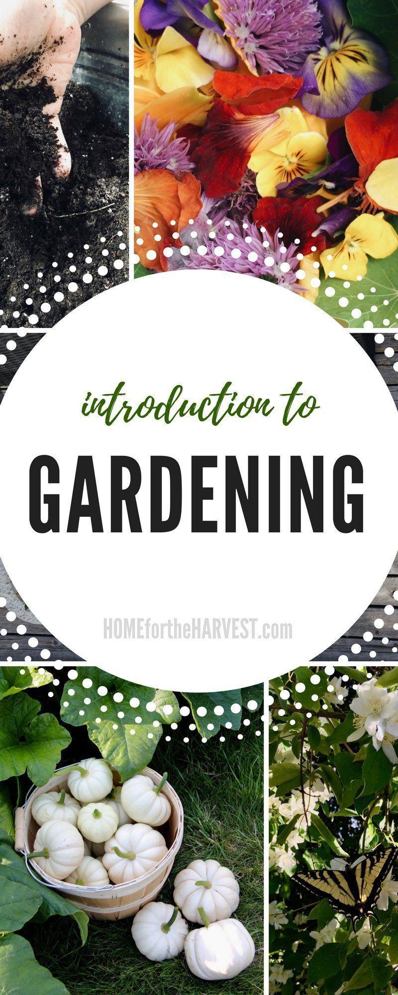 7 Wondrous Garden Ideas Market Ideasgarden