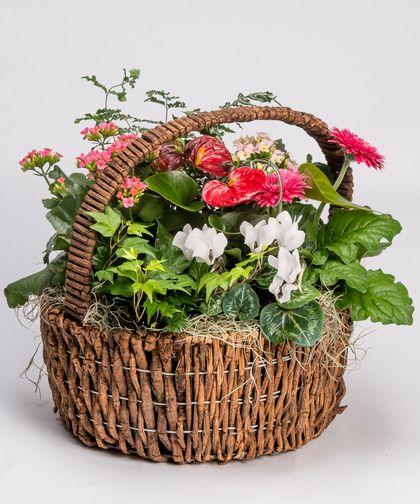 English Garden Basket Garden Basket English Garden Blooming Plants