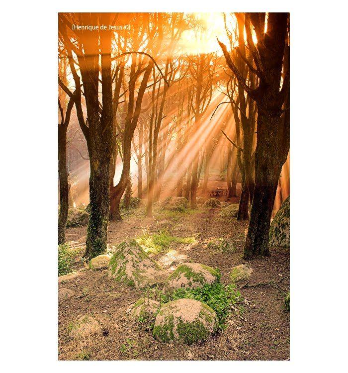 Raios de sol entre árvores