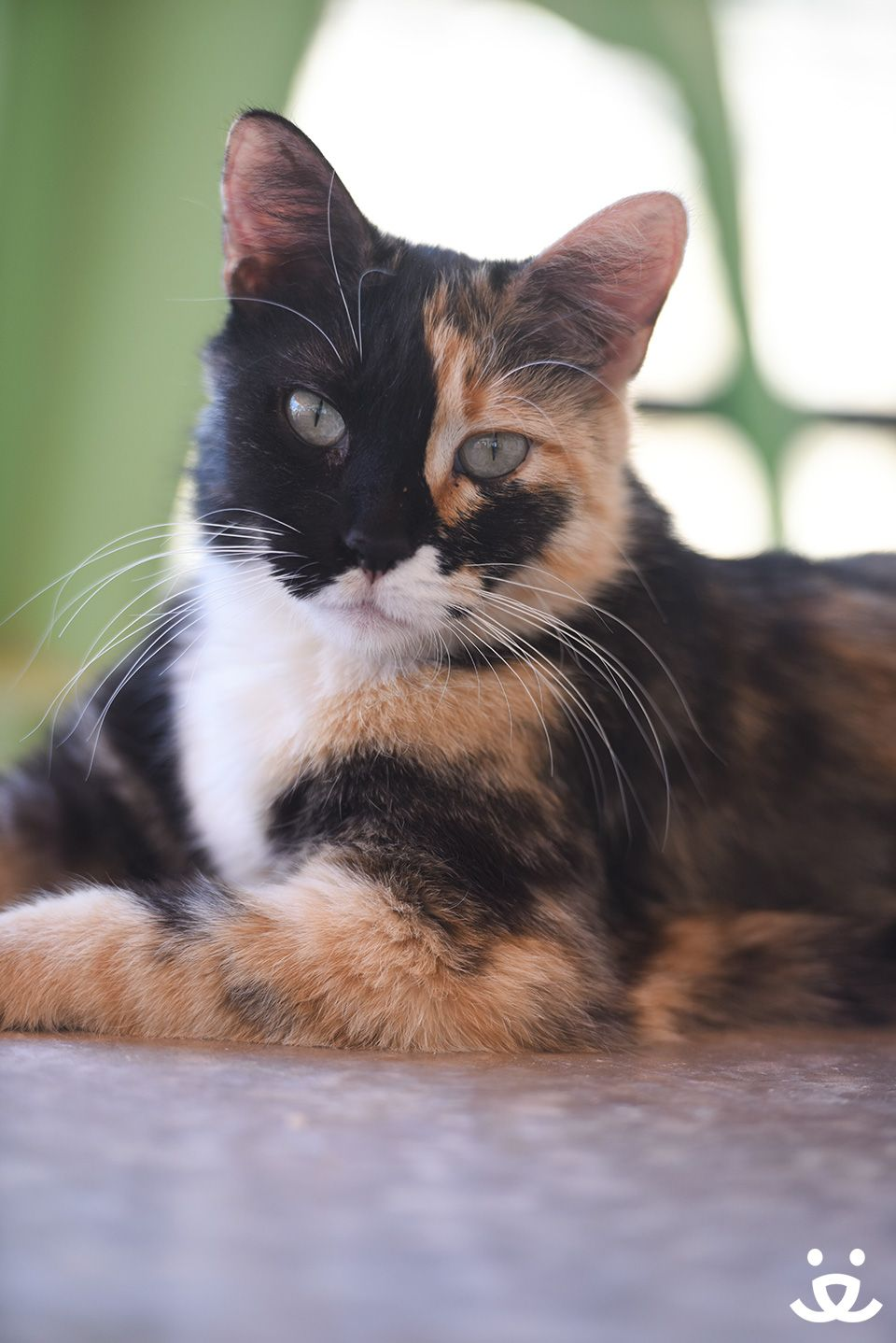 Adopt From Our Sanctuary Cute Cats And Kittens Cute Animals Cute Kitten Pics