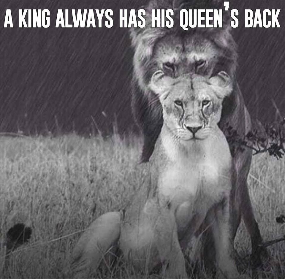 A King Always Has His Queen S Back Lion Relationships Trust
