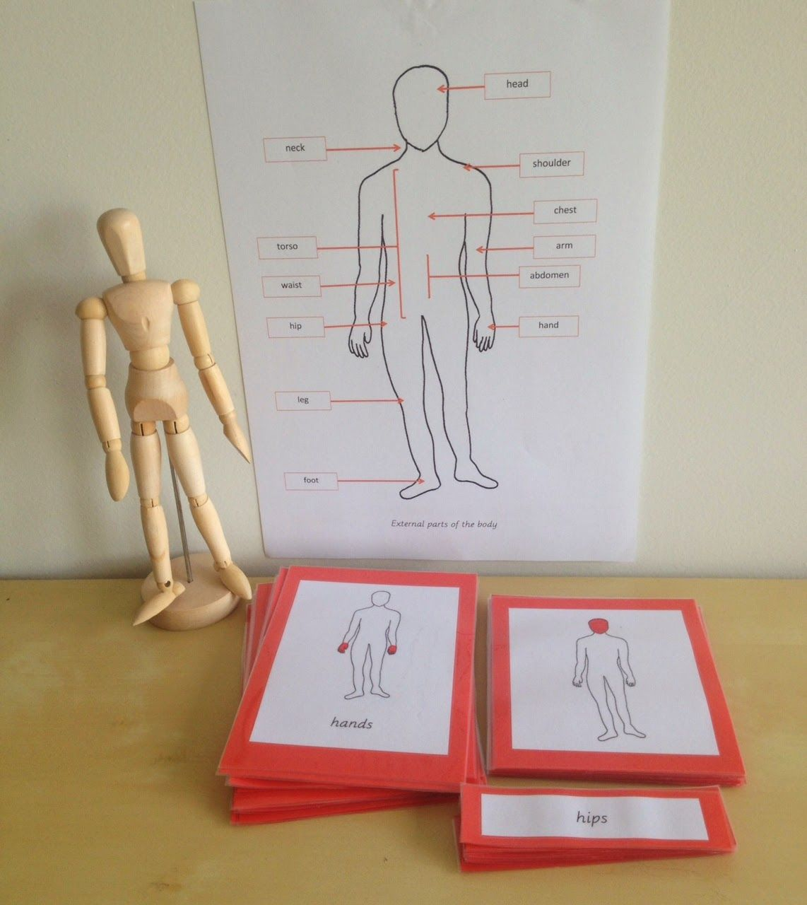 Free External Parts Of The Body Printables From Elementary Observations