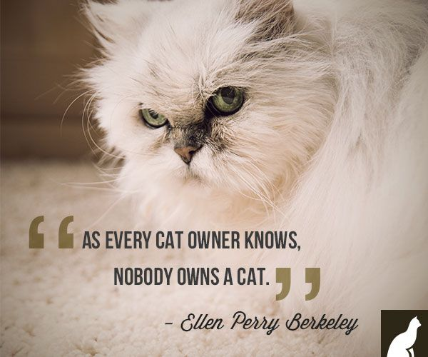 Funny Cat Sayings Quotes: Funny, Cute Quotes About Animal