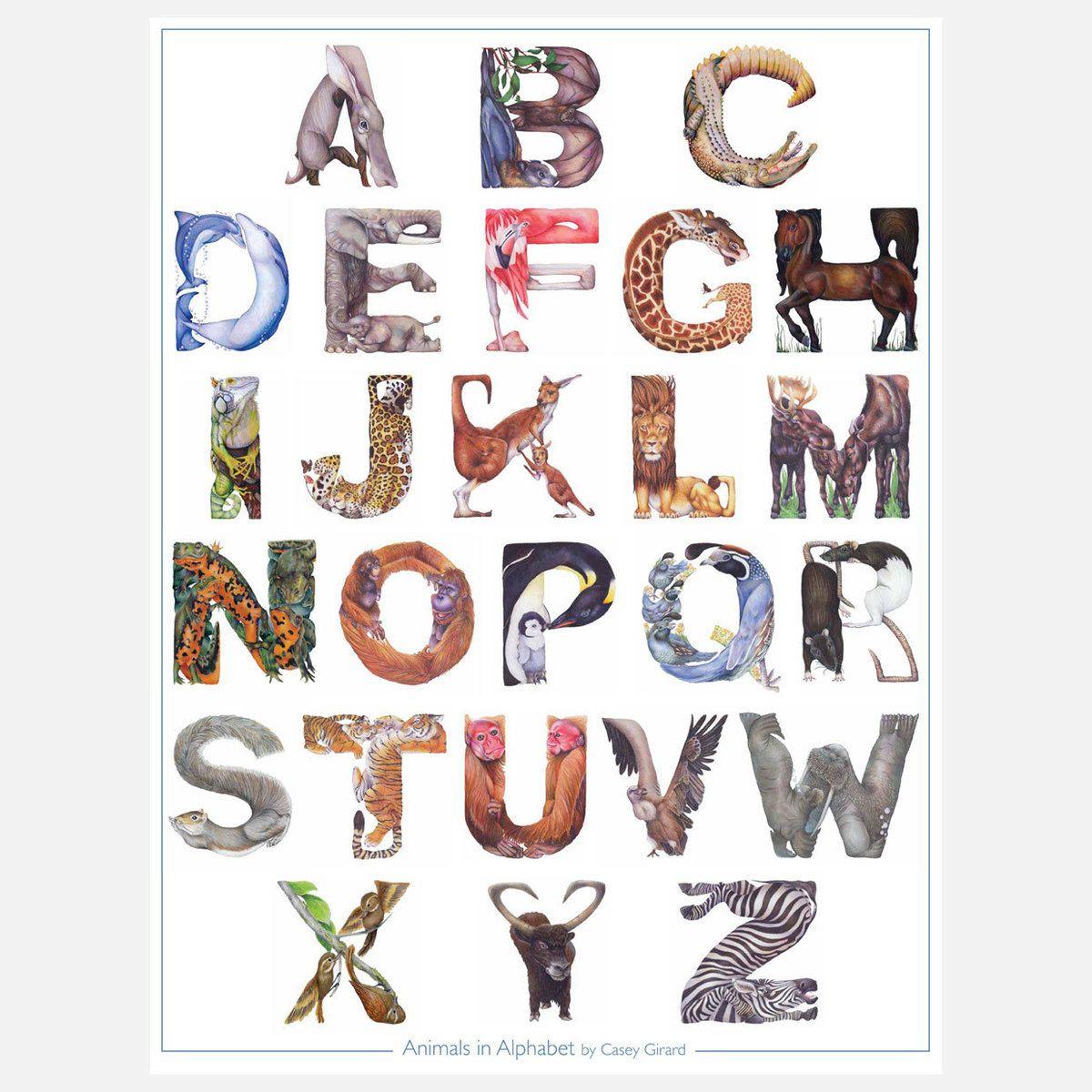 Animals In Alphabet Poster By Casey Girard