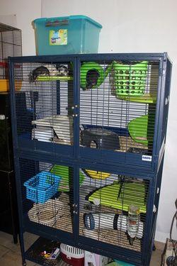 Savic Suite Royal Xl Google Suche Ratte Suche