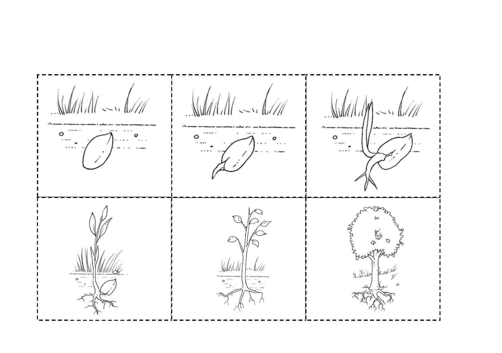 Resultado De Imagen Para Secuencia Del Crecimiento De Una Planta