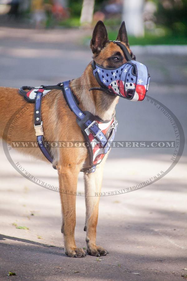 Malinois Handpainted Leather Canine Harness American Pride Style H1ap 1073 American Pride Hand Painted Leather Dog Muzzle Dog Training Equipment Dog Harness