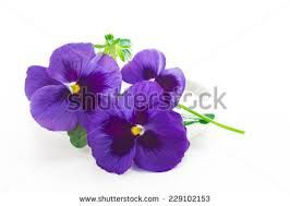 Image result for simple PANSIES FLOWER PAINTING