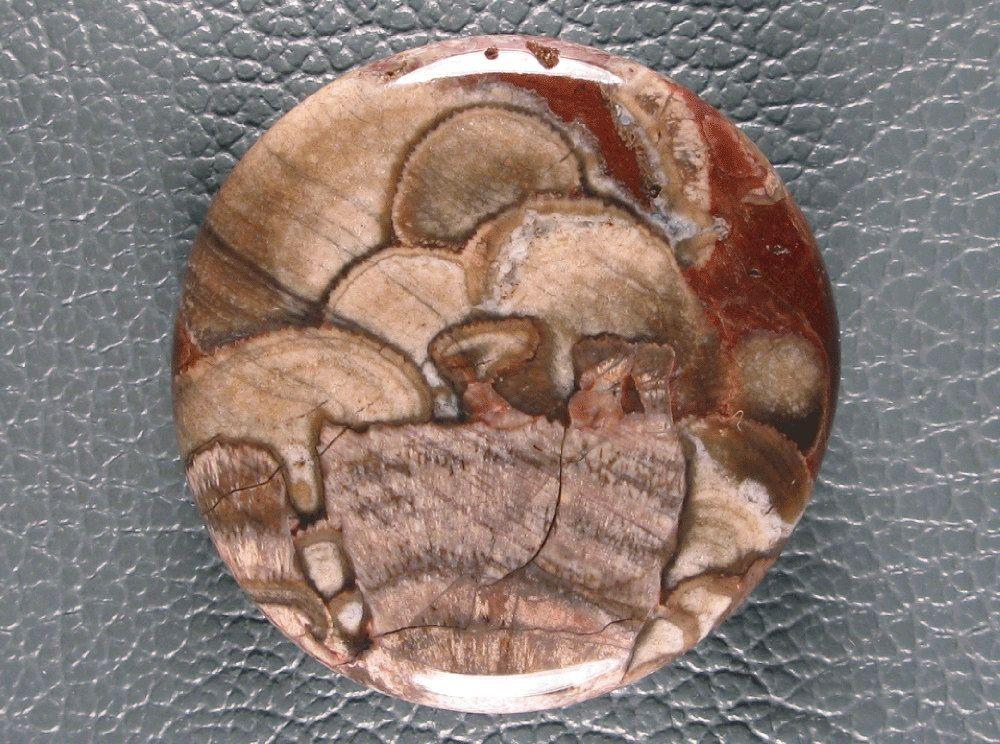 Designer Cabochon Mushroom Jasper NAC by VividGem on Etsy