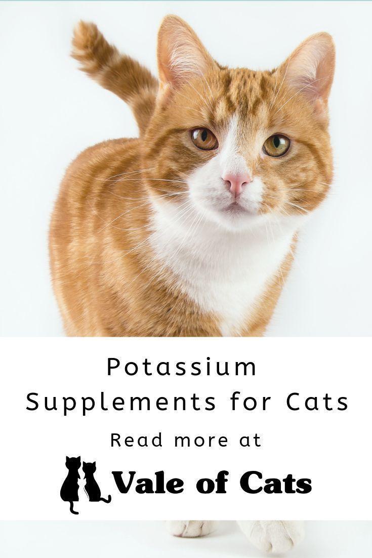 Potassium Supplements for Cats Small cat breeds, Cat