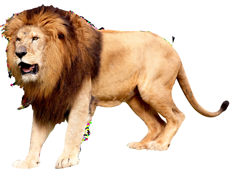 Lion Png Image Animals Png Images Lion