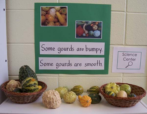 Introducing Gourds into the Fall Classroom.  Example of using signs in the science center to add print to the pre-k classroom.  Great way to boost vocabulary and language development