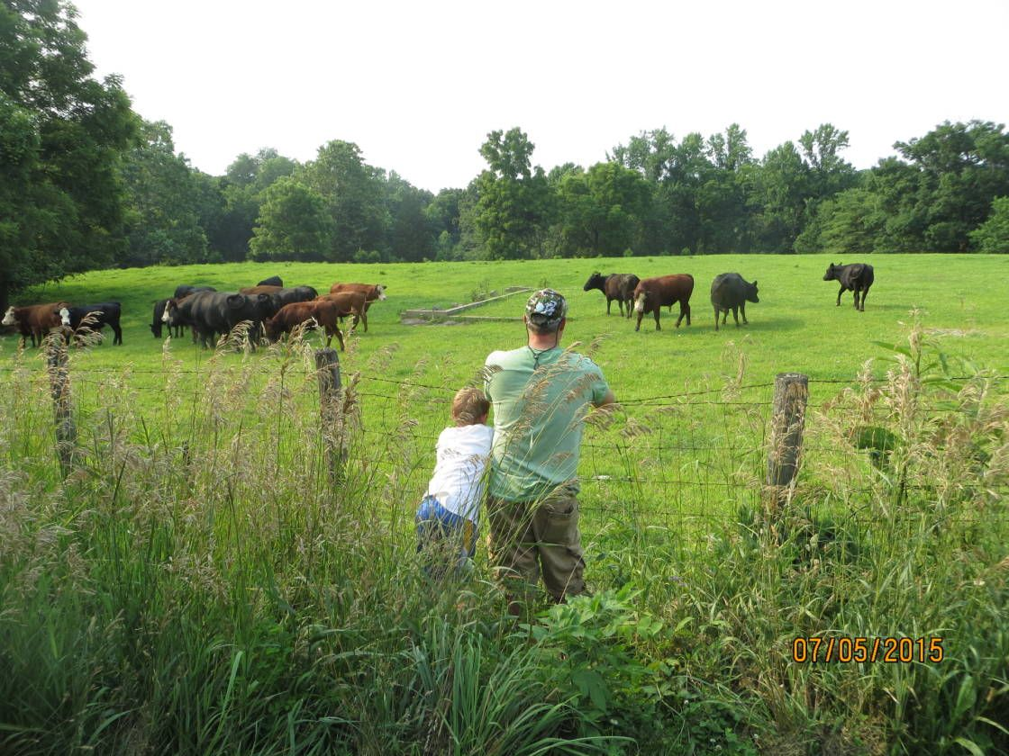 Horse Property For Sale in Parke County , Indiana, This