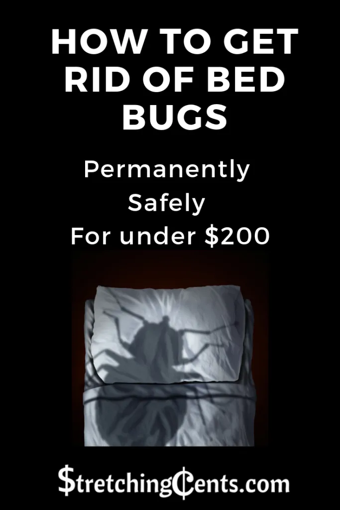 How to Get Rid of Bed Bugs Rid of bed bugs, Bed bugs