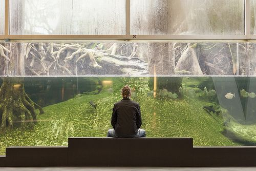 Tiedemuseo Cosmocaixa, Barcelona | Sisälle rakennetussa sademetsässä tapiirit, kilpikonnat, käärmeet ja piraijat elävät trooppisessa kuumuudessa.