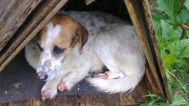 Petition · DEMOTTE RUDY: CONDAMNER LES MALTRAITANCES ANIMALIERS PARTOUT DANS LE MONDE · Change.org