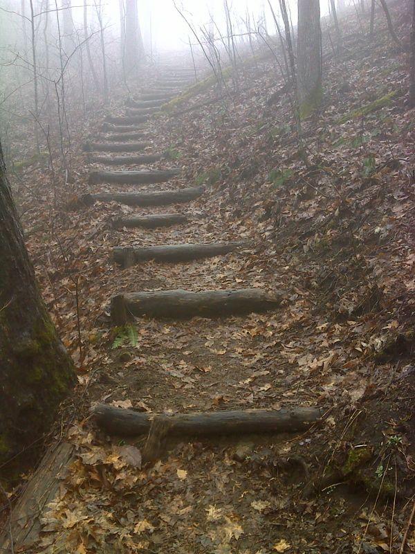 Best Log Steps Google Search Sloped Garden Garden Stairs 640 x 480