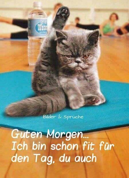 Pin Von Karin Kramer Auf Guten Morgen Yoga Katze Lustige