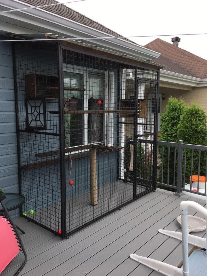 Outdoor Cat Enclosure Ideas