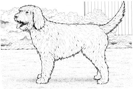 Cockapoo Dog Coloring Page Super Coloring Dog Coloring Page Puppy Coloring Pages Labradoodle Drawing