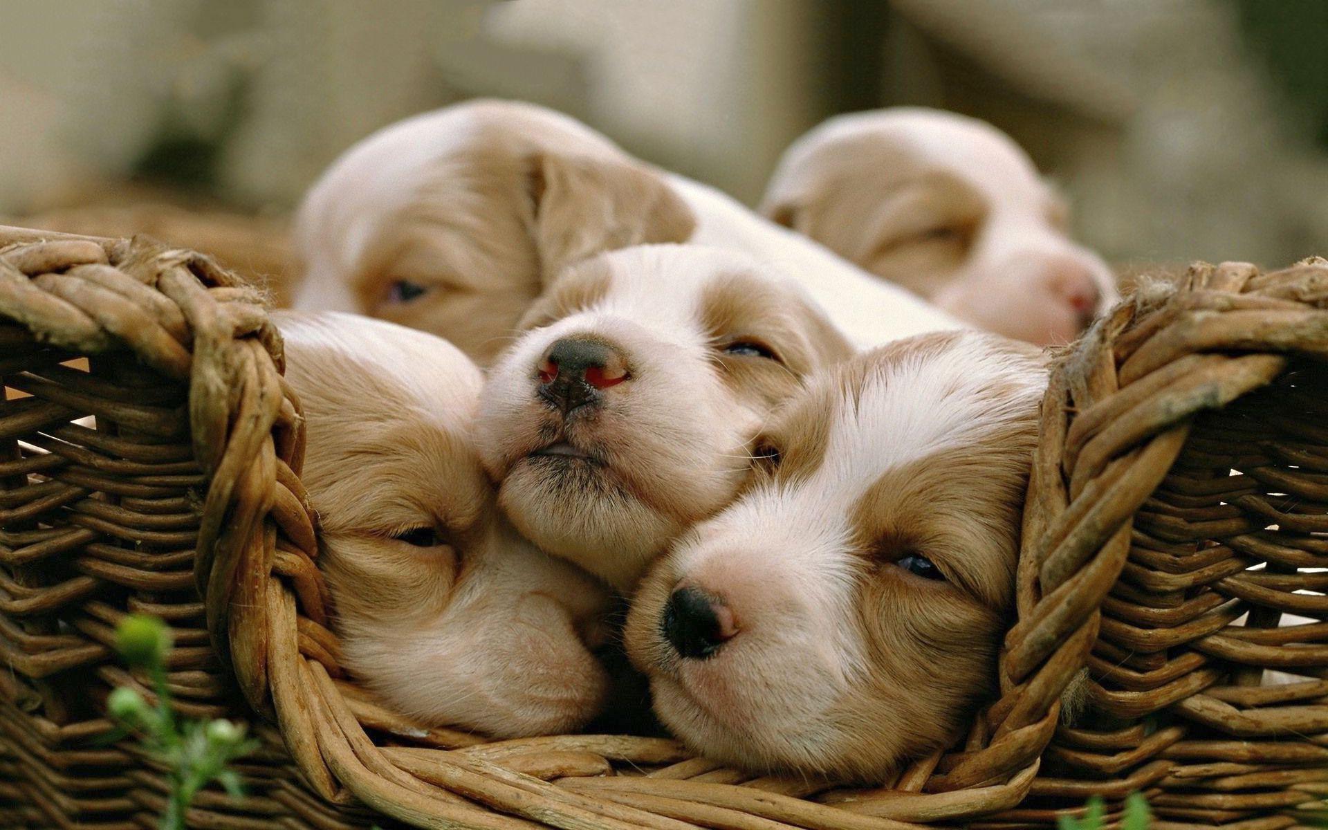 Sleepy Puppies Wallpapers