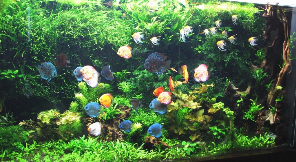 Big planted aquarium large size pinterest aquariums for Planted fish tank