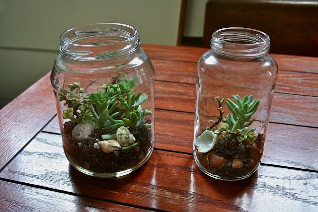 DIY Terrariums - Succulants growing in Upcycled Jars