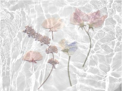 Flowers in the water. This looks like something from an iSpy book. // MANIAMANIA