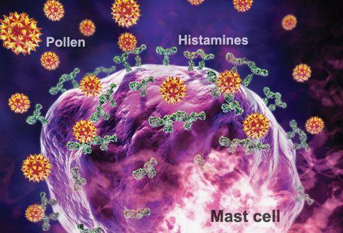 Allergic Response: Histamine Release