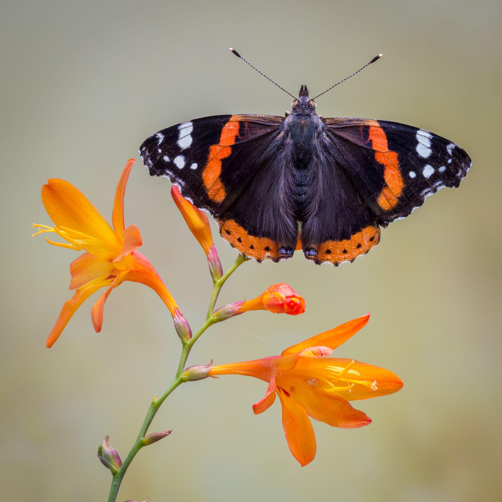 Beautiful Butterflies, Butterfly, Lovely