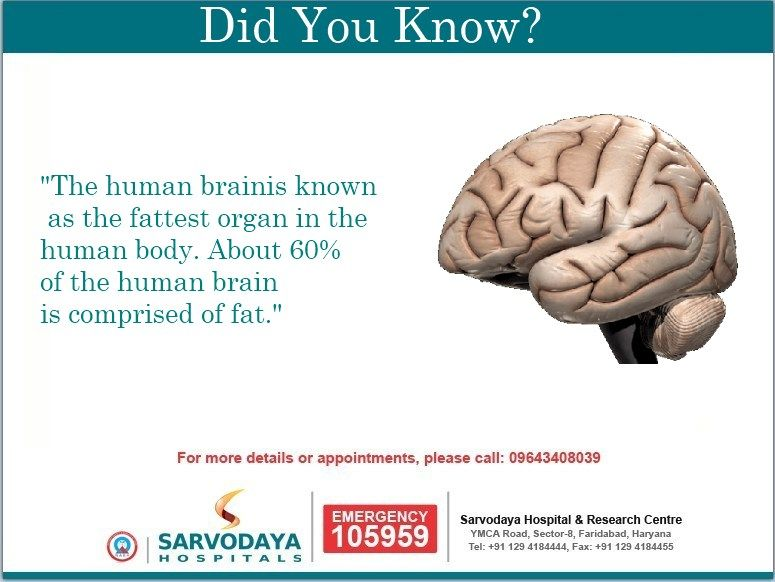 Did you know? The #human #brain is known as the fattest ...