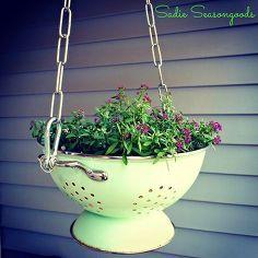 vintage enamel colander hanging planter, container gardening, gardening, outdoor living, repurposing upcycling