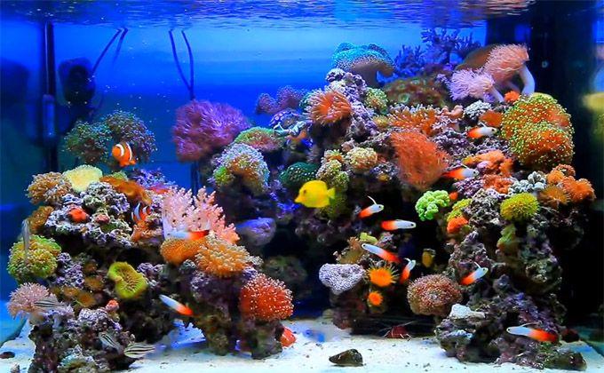 Reef Aquascaping Inspiration