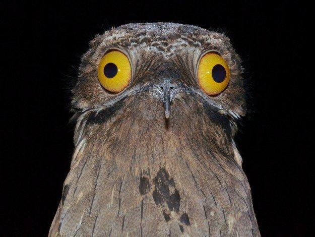 Este pájaro que definitivamente no le hace a las drogas. | 16 Pájaros que no vas a creer que existen