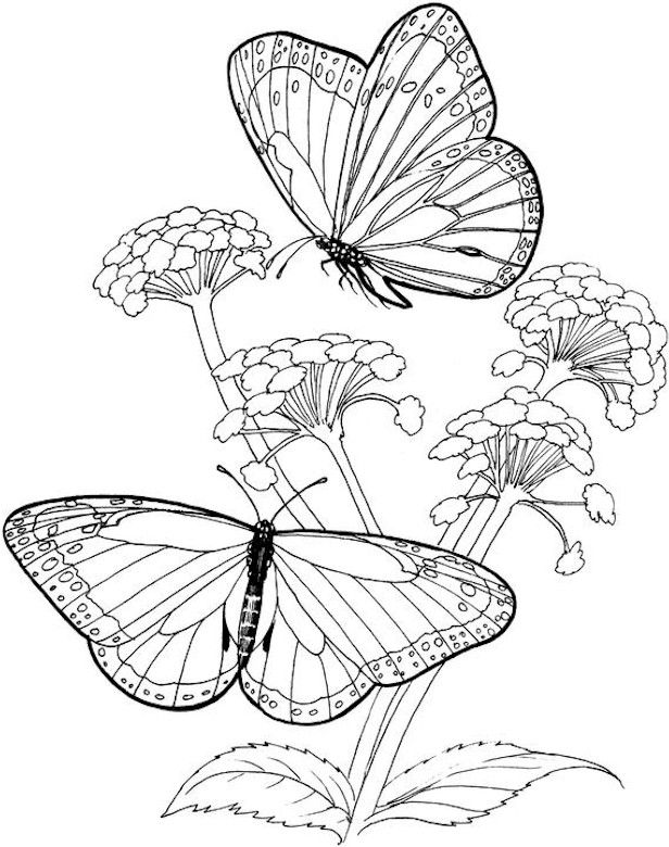 Pin on Coloring Pages | 780x616