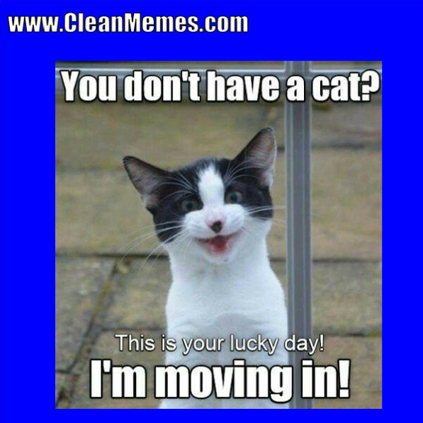 Pin by Clean Memes on Clean Memes Cat memes clean, Funny